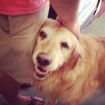 Meet Sugar, official welcoming committee of the Grapevine Market On Main!